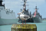 INR 75th Open Ships Day Auckland. Photo: Royal New Zealand Navy