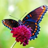 *Butterfly...