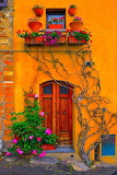 Orange wall with red door and foliage