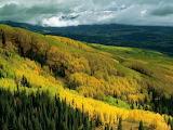 Bosques Primavera