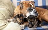 Cute Family ...