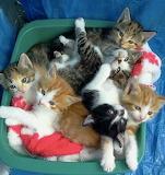 Six sweeties