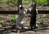 Cats-curious