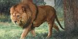 Anatomia-de-leon