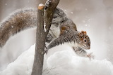 Squirrels Snow Branches 576700 1280x854