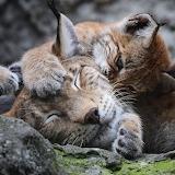 Wake Up Mommy 426
