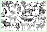 Wild Animals Sketches