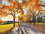 Autumn-alley-park