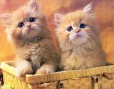 Sweet Kittens...