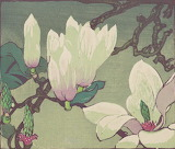 """Flowers """"Nat. Galleries of Scotland"""" Magnolias """"Mabel Royds"""""""