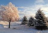 Puzzle snowy trees