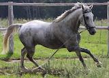 Horse-1143322 1920