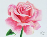 Drawing flowers 1 a rose by f a d i l-d7jy599