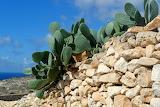 Cactus el las rocas