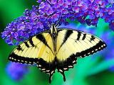 ^ Butterfly on blue flower