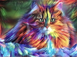 Colourful Kitty