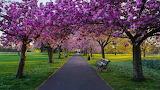 Krolewski-park-greenwich-w-londynie