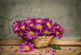 Flowers, chamomile, still life, basket