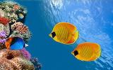 Reef Off Island of Saint Thomas USA