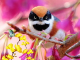 A Bird of Many Colors