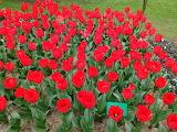 ^ Australian Flower Show