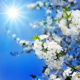 Plum Blossom...