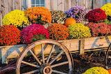vintage wagon flowers