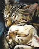 Nap time by Celia Pike
