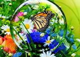 Bubble butterfly