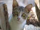 Ach , te oczy kocie