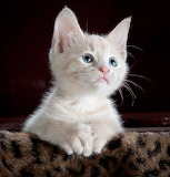 Kitty-551554 640