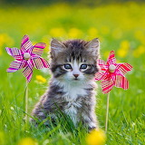 Kitten & Wind Wheels...