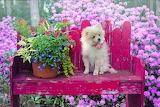 Animal Photography @ Pixabay...