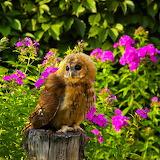 ~Cute Owl~