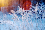 Frost, cold, winter, grass, sunrise