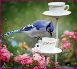 ~Tea Time?~
