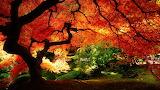 ^ Fall colors