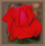 Rose [Ekstasy]