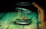 Water-glass-2542790 960 720