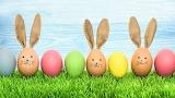 Bunny eggs 2