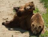Colorado Wild Animal Sanctuary