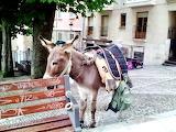 Deluxe Transport Seen in Castrojeriz