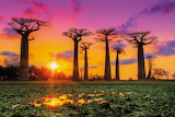 Madagascar-beautiful-baobab-trees-hero