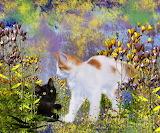 cats-in-the-garden-elaine-manley