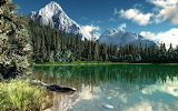 Mountain lake tree reflection view