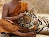 Lisa_kristine_com-tigers-guardian-thailand_large