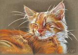 Sleeping Ginger Cat, Schukina