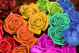 A Rose for Every Color