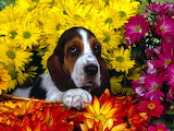 Puppy and flowrs