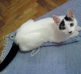 Kitty-Chengang